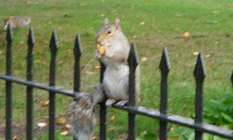 squirrel_03.jpg